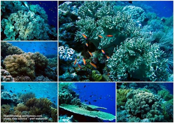 bawah-laut1.jpg